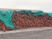 42_firewood_pile