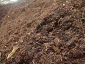 96_compost_mushroom